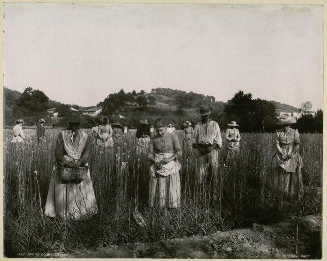 L'angelus dans les champs de fleurs de Grasse