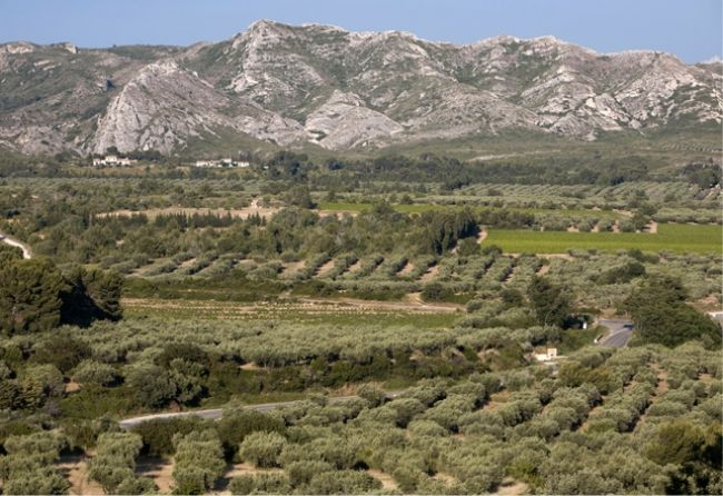 Sur la route des oliviers de Provence