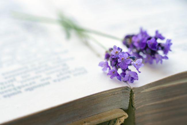 3 grands classiques littéraires sur la Provence