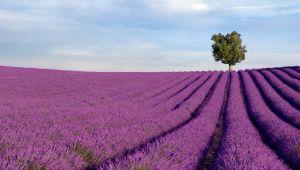 3 faits historiques que vous ignorez peut-être sur la Provence