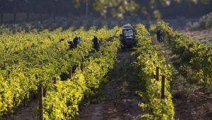 Château La Coste: un vignoble provençal empreint d'Histoire et de modernité