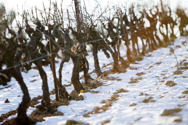 Un vignoble de Provence