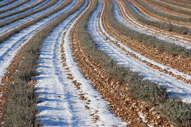 Que devient la lavande en hiver?