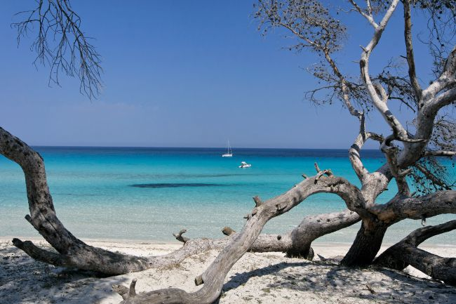 La plage de Saleccia / サレッチアビーチ