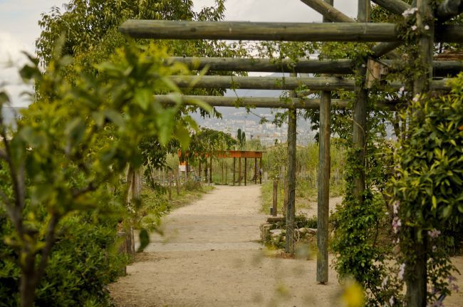 国際香水博物館の庭園