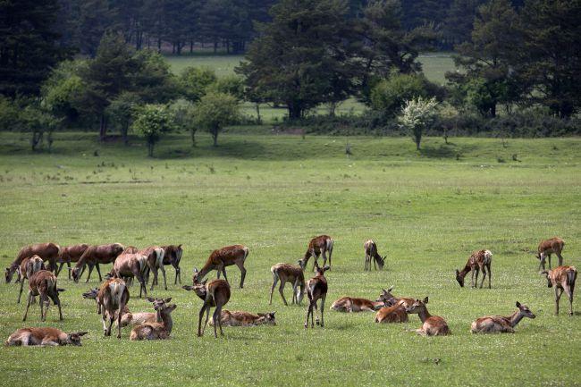 アルプ・マルティム県で野生動物と触れ合う
