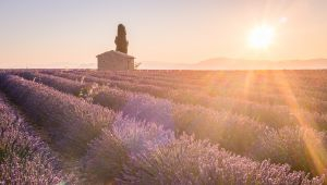プロヴァンスの絶景夕陽スポット
