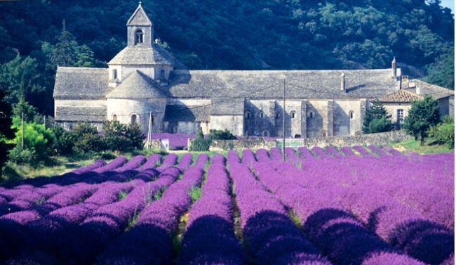 L'or bleu de la Provence