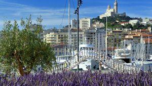 マルセイユに  ラベンダーがやってきた!