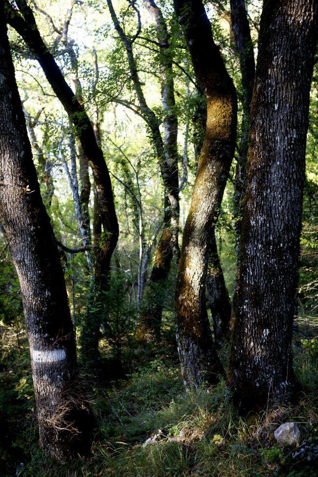 魅惑の森 サント・ボーム