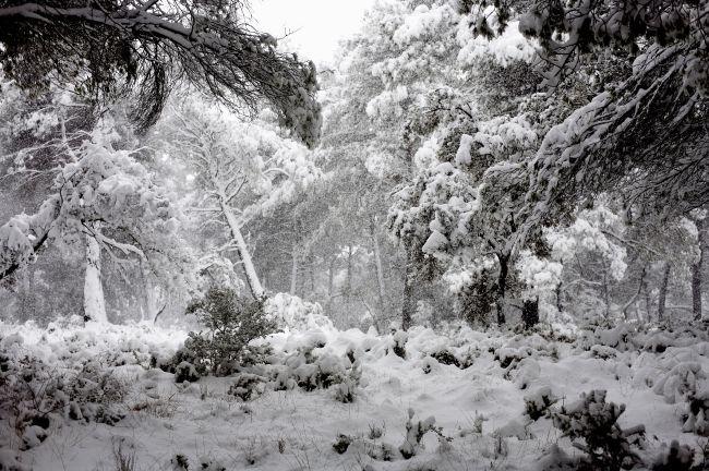 雪のプロヴァンス
