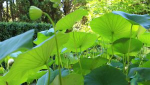 Ambientação exótica no jardim Serre de la Madone