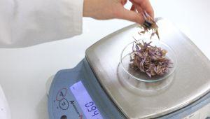 Laboratório L'OCCITANE especializado em pesquisas vegetais