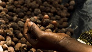 Manteiga de Karité: parceria com as mulheres de Burkina Faso