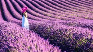 Минутка красоты: какой аромат выбрать на лето?