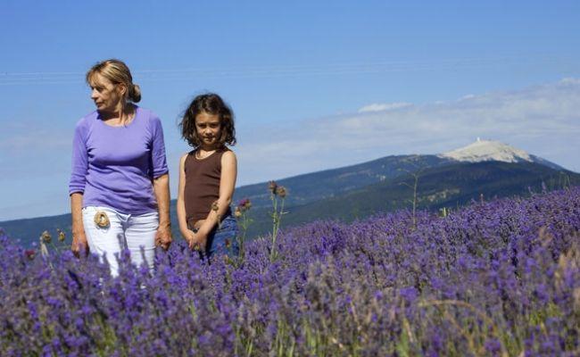 跟随Marguerite Blanc体验采摘薰衣草的乐趣