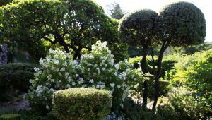 博尼约La Louve花园——设计师打造的绿色天堂