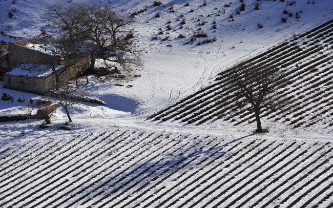 冬日薰衣草