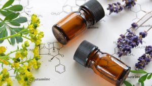 草本疗法,嗅觉芳香疗法
