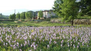 鸢尾谷酒庄(Domaine du Val d'Iris):优质葡萄酒之乡