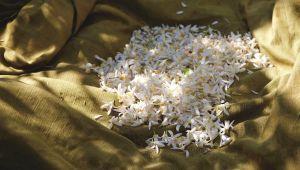 橙花,来自香水之都格拉斯(Grasse)的甜美香氛
