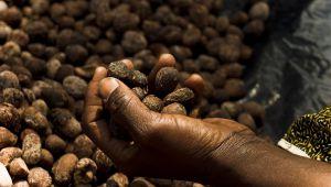 乳油木 :與布吉納法索婦女建立永續合作關係