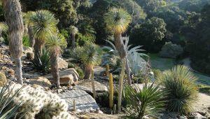 讓自然轉變成藝術的 Domaine du Rayol 花園